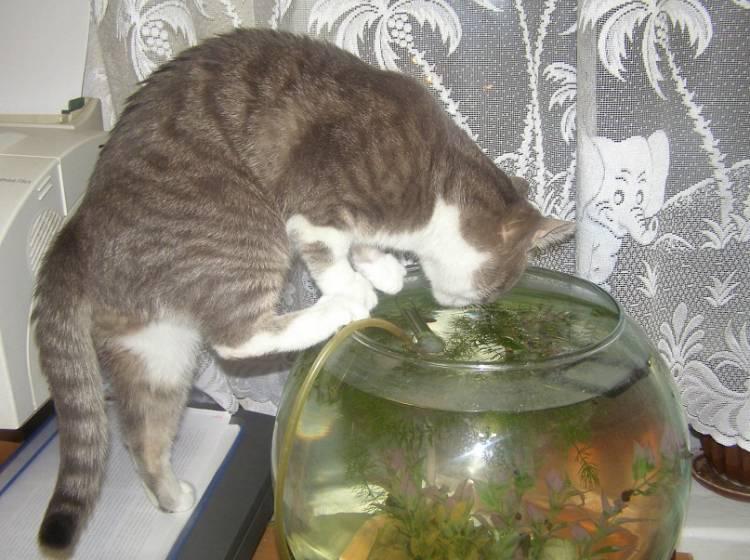 Почему кошка стала пить много воды?
