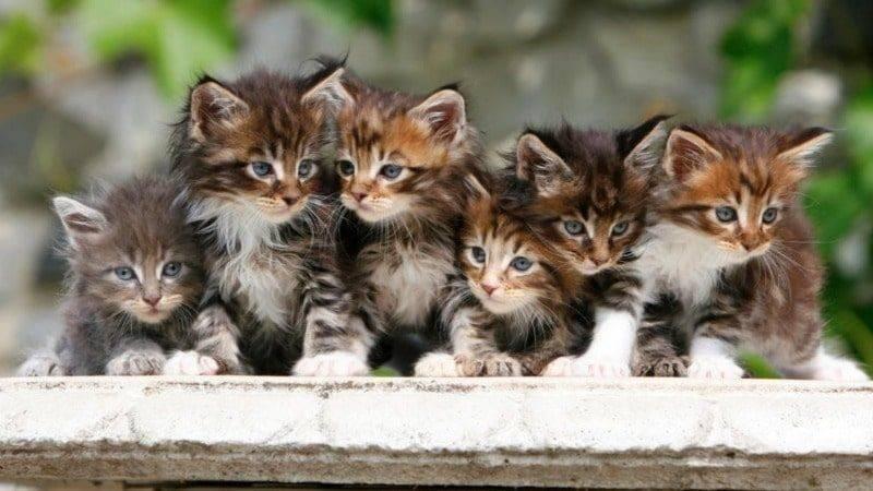 Самые маленькие кошки в мире: дикие и домашние