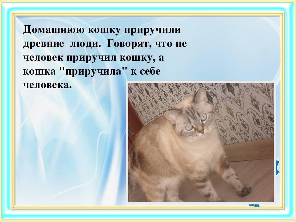 Зачем люди приручили кошку | сухарева башня