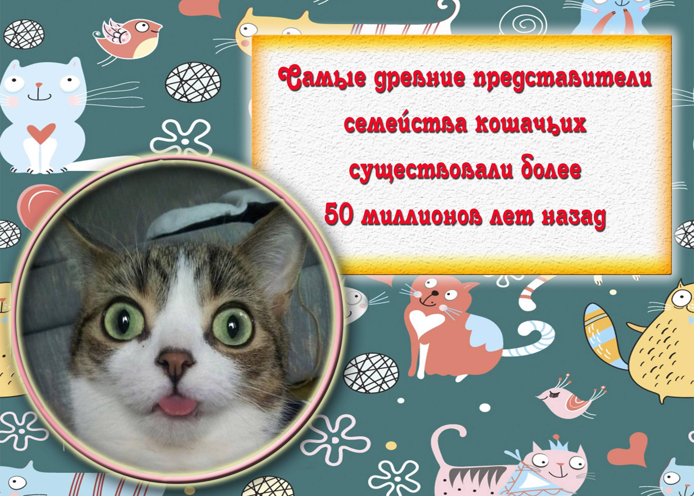 Интересные факты про кошек для детей
