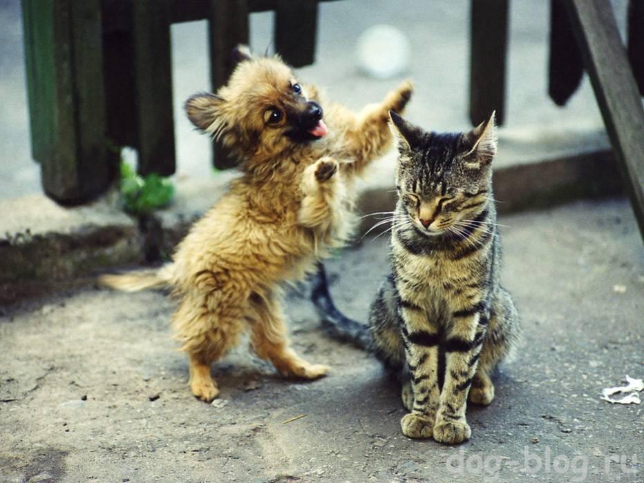 Варианты как можно приучить собаку и кошку дружбе в одной квартире