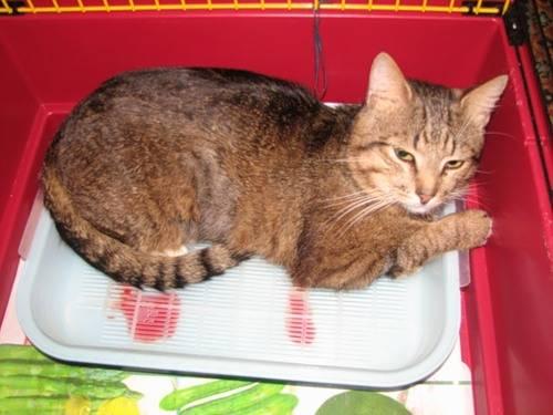 Кот часто мочится: причины постоянных позывов к мочеиспусканию у кошек, лечение патологий