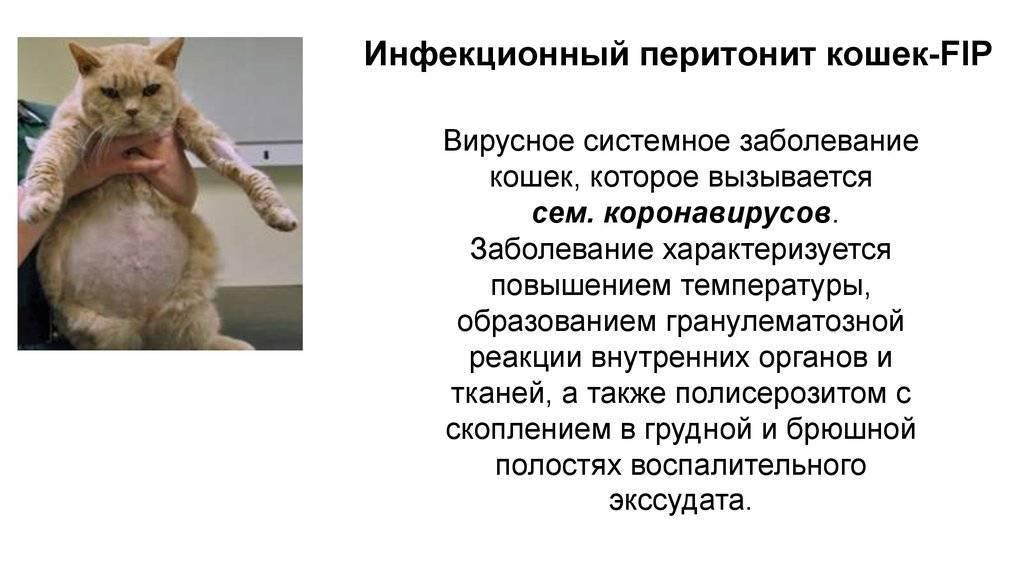 Симптомы гиперпаратиреоза у кошек