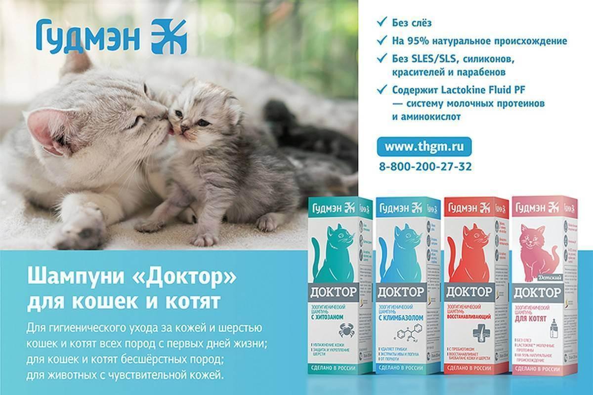 Длинношерстные кошки : уход за шерстью - котоблог