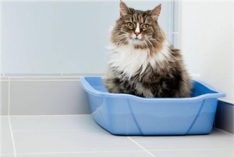 Почему кот писает в лоток а какает рядом почему кот писает в лоток а какает рядом