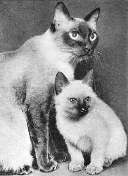 Классы кормов для кошек — классификация, сравнение и подробный обзор состава (85 фото и видео)