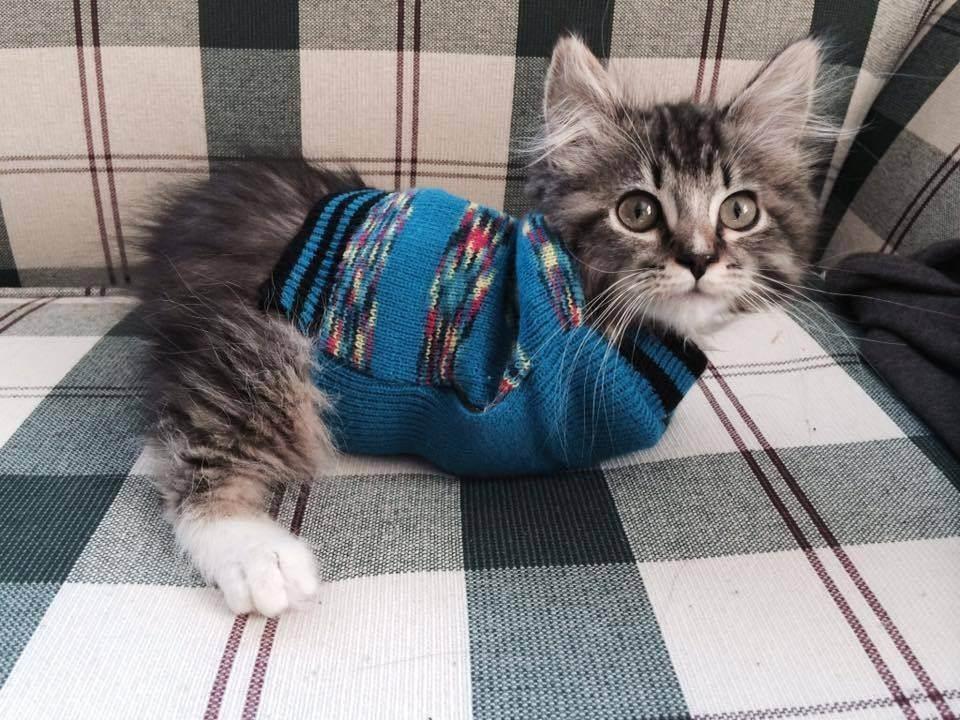 Травма позвоночника у котенка что делать