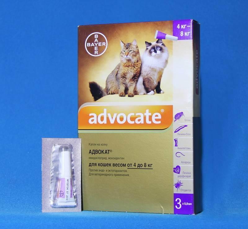 Адвокат для кошек: состав, форма выпуска, цена, производитель