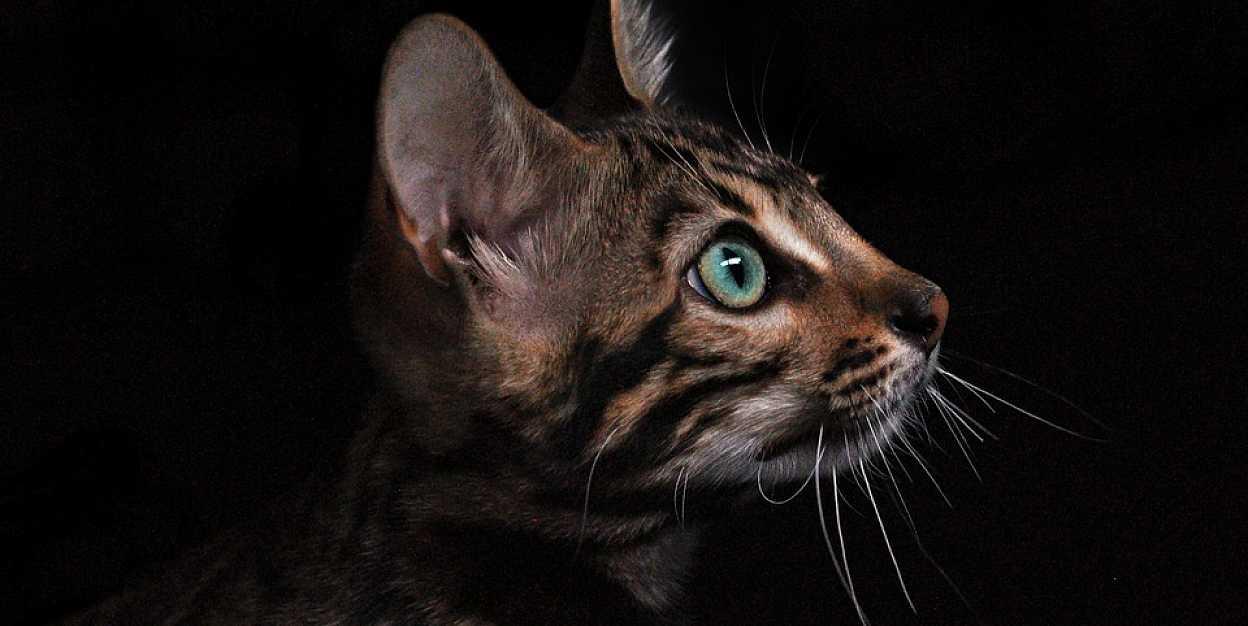 Кастрация котов и стерилизация кошек: все аргументы «за» и «против»