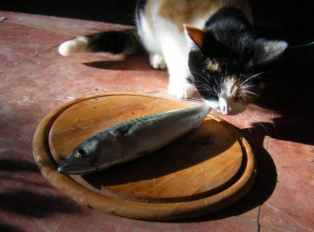 Можно ли кормить кошку рыбой: все о пользе и вреде данного продукта