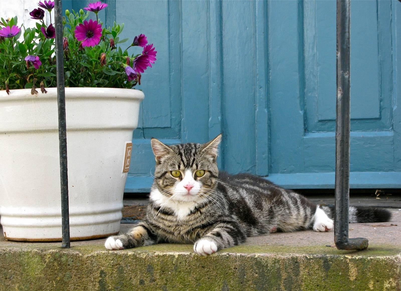 Как отучить кошку есть комнатные цветы и другие растения: воспитываем, отвлекаем, приучаем