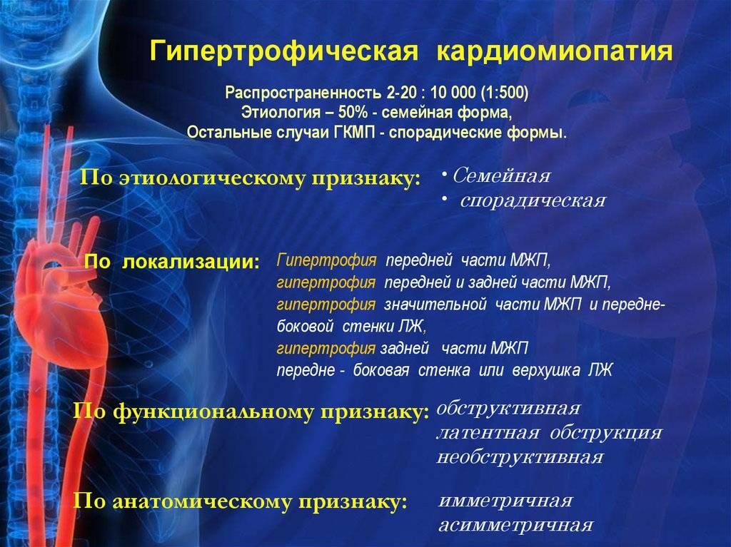 Симптомы гипертрофической кардиомиопатии у кошек, лечение наследственной гкмп, прогноз