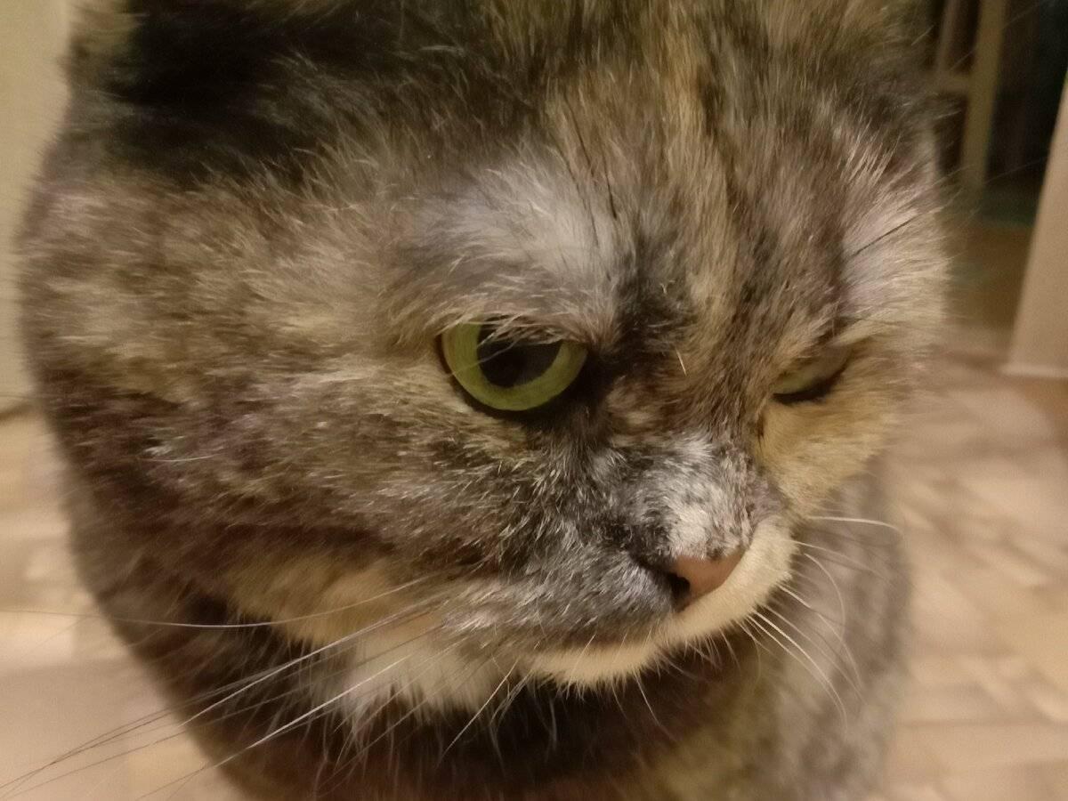 Могут ли кошки плакать со слезами — кот плачущий