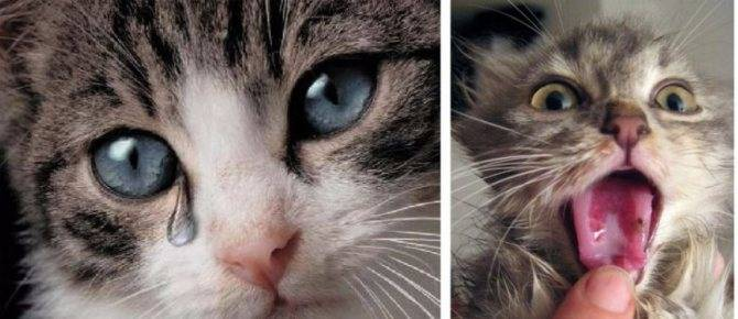 Кошка чихает и слезятся глаза: что делать, лечение