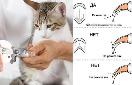 Можно ли кошке стричь когти, для чего и как правильно, альтернативные решения