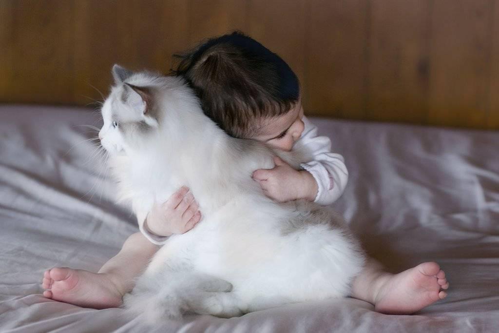 Самая ласковая, добрая и спокойная кошка: названия пород, их описания и фото