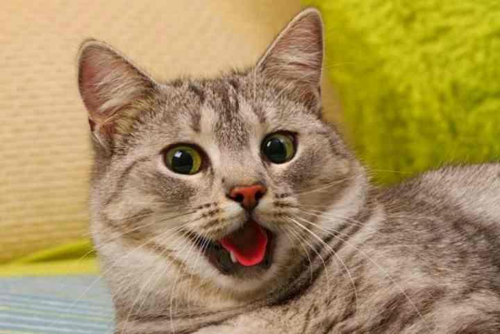 Почему у кота изо рта текут слюни: причины, диагностика и лечение