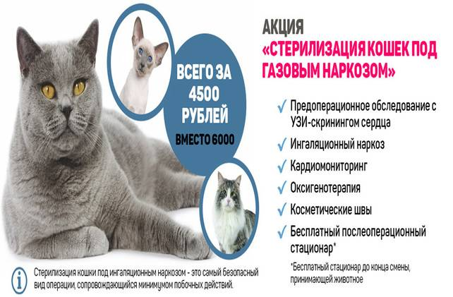 Стерилизация кошек: виды, достоинства и недостатки каждого метода
