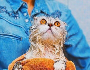 Как помыть кота без стресса