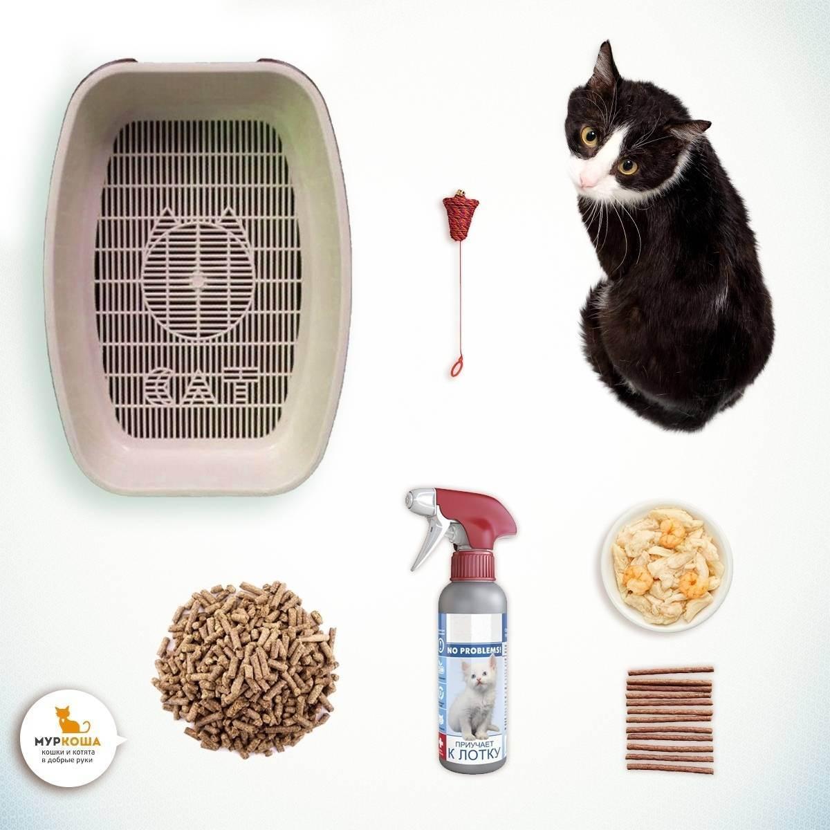 10 вирусных и инфекционных заболеваний кошек