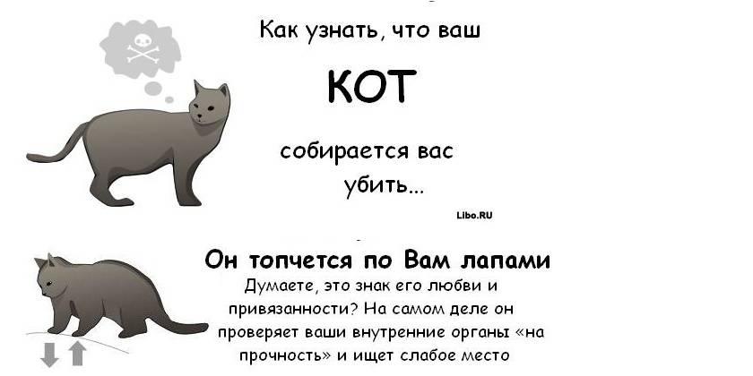Как понять что кошка тебя любит - 7 признаков любви