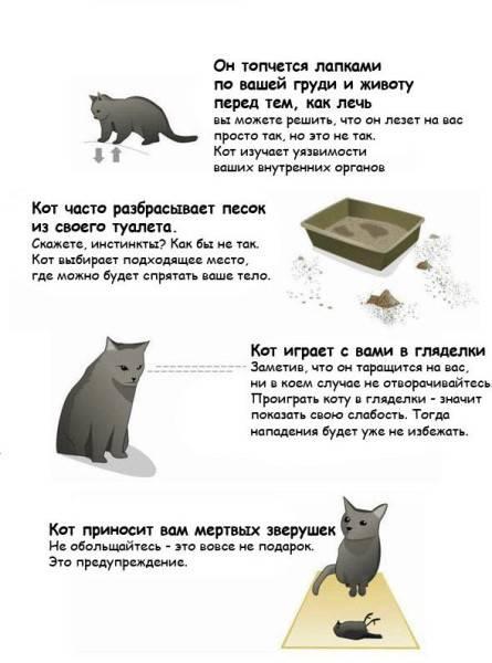 Кот хочет кошку: как успокоить и какие средства применять?