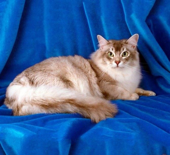 Плебеи кошачьего мира: особенности содержания беспородных мурлык