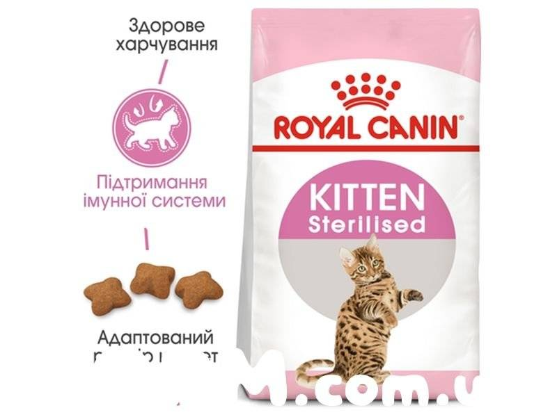 Рейтинг лучших кормов для котят разного класса: сухие корма и паучи – какой лучше выбрать