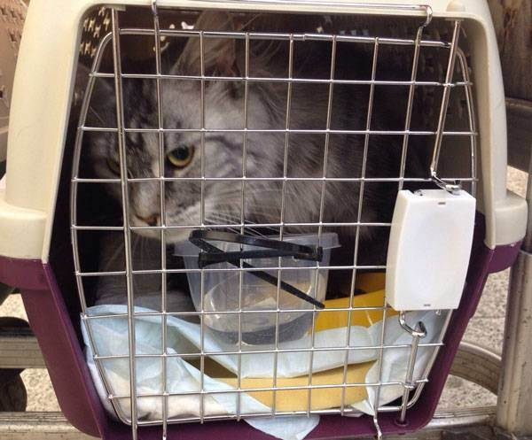 Перевозка кошек в самолете
