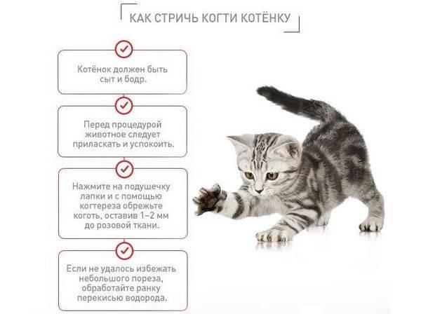 Как правильно глистогонить кошку?