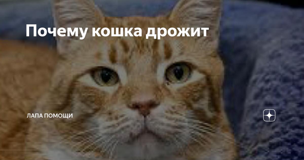 Кошка дрожит после стерилизации: особое внимание на здоровье!