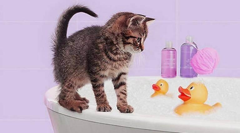Как ухаживать за котенком в домашних условиях, чем кормить