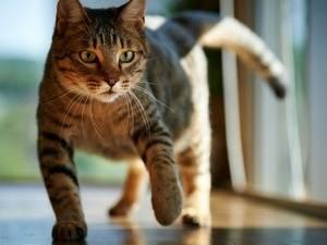 Как убрать запах кошачьей мочи с паласа