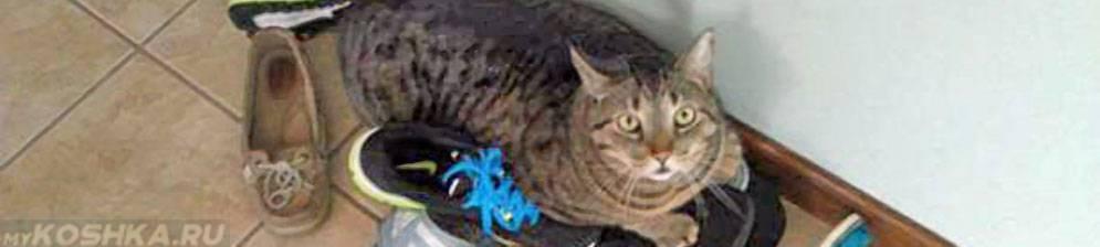 Кошка грызет обувь: кошка балуется или что-то не в порядке кошка грызет обувь: кошка балуется или что-то не в порядке