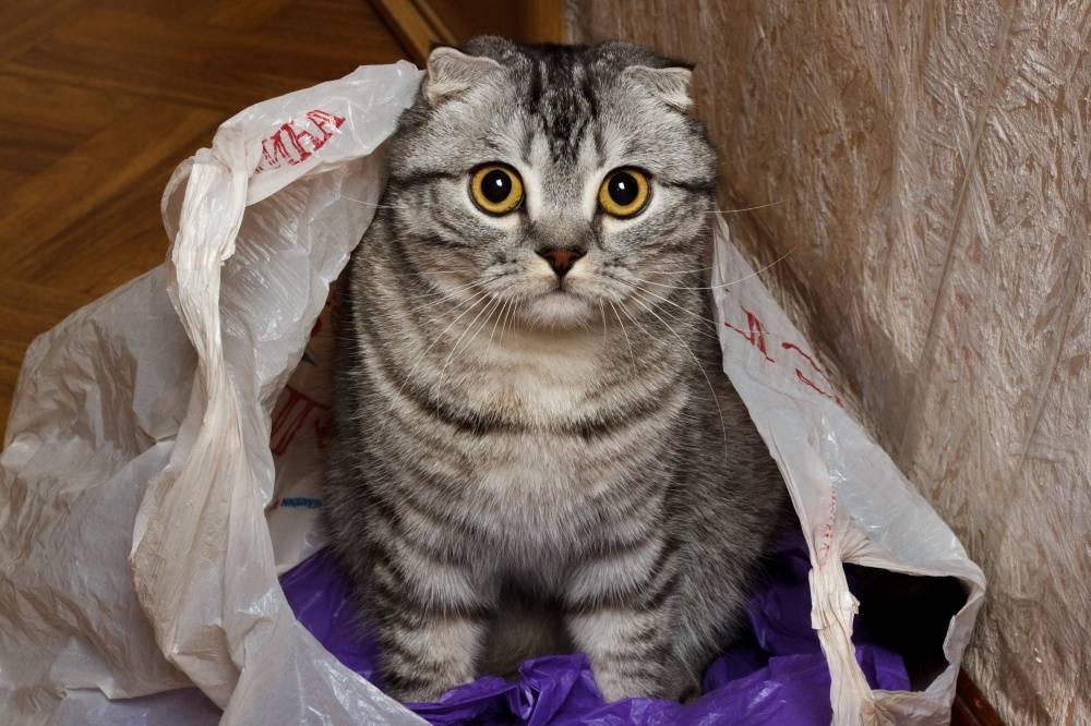 Почему коты любят сидеть и грызть коробки и пакеты – ответы ученых
