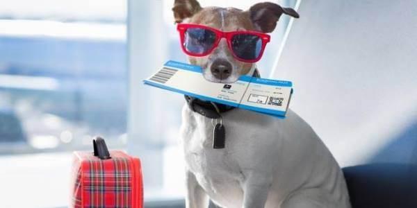 Путешествие с кошкой на самолете — womanwiki - женская энциклопедия