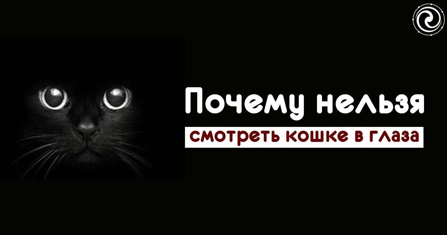 Почему нельзя смотреть кошке в глаза — приметы, мистика