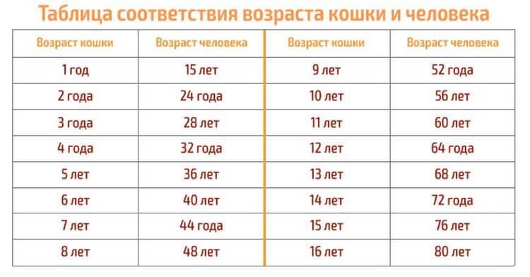 Узнаем возраст кошки по человеческим меркам: таблица соотношения лет