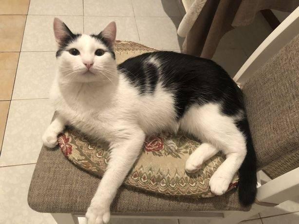 Кот перестал ходить в туалет после кастрации