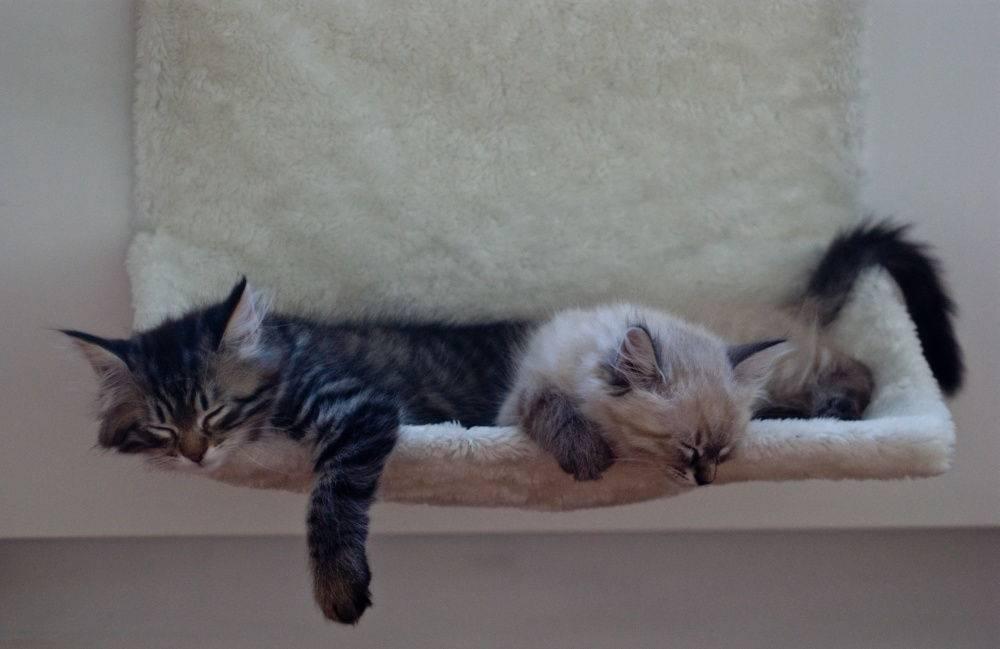 Сонник кошка плачет. к чему снится кошка плачет видеть во сне - сонник дома солнца