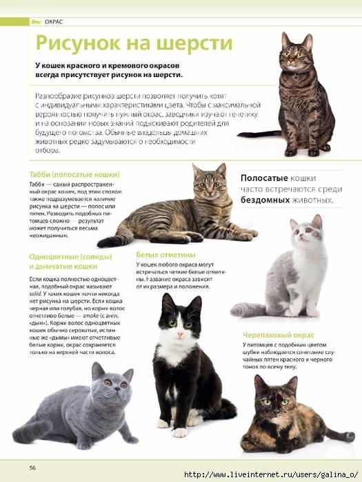 Топ-7 самых злых пород кошек