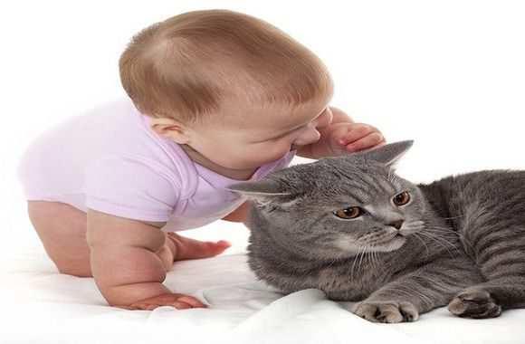 Выясняем, как проявляется аллергия на кошек у детей: подробное описание признаков