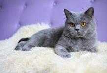 Корм для кошек 1st choice: обзор, отзывы, рекомендации