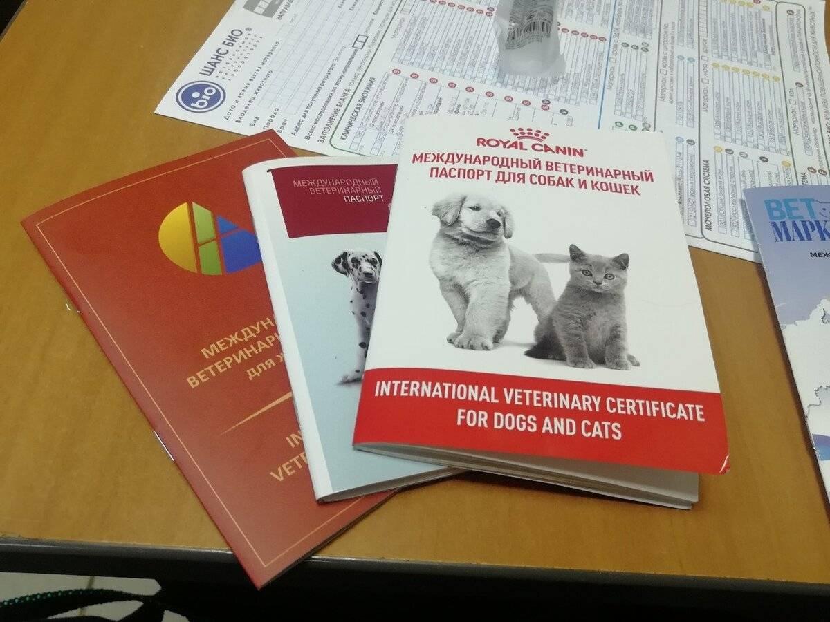 Как получить ветеринарный паспорт для кошки