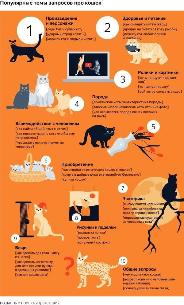 Кот не может пописать что делать в домашних условиях: лечение