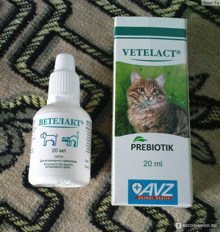 Вазелиновое масло для кошек   при запорах, как давать, дозировка, доза