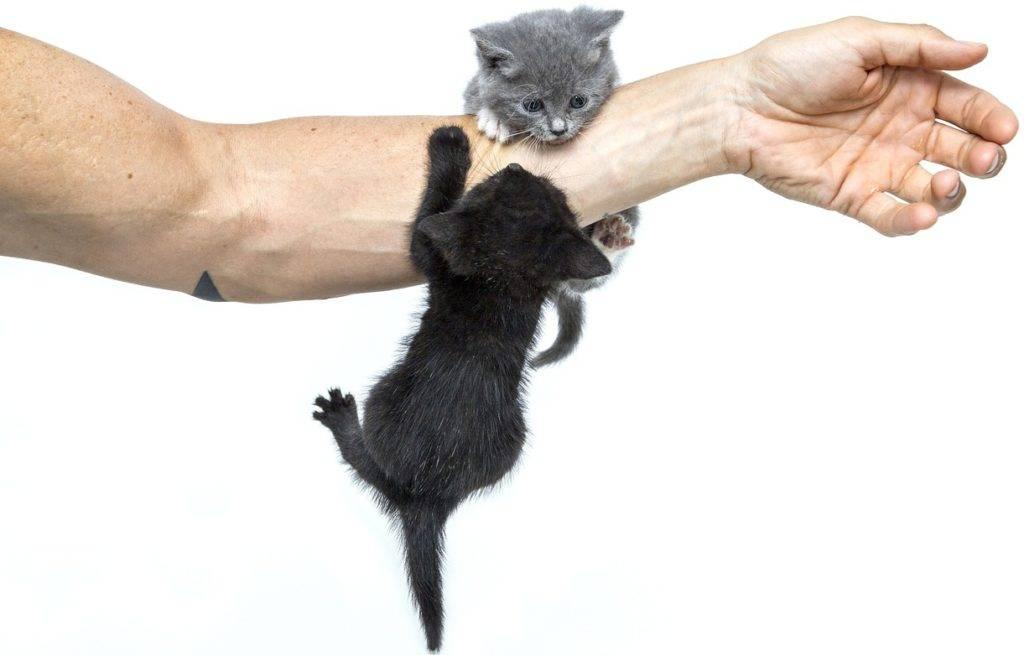Что делать, если кот нападает на хозяев