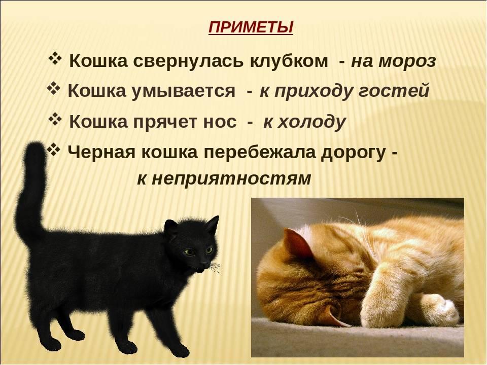 Пропажа кошки в народных приметах