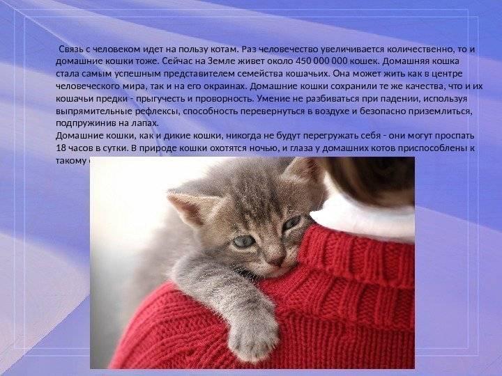 Польза от кота в квартире. какая польза от кошек? какая от кошки польза для человека