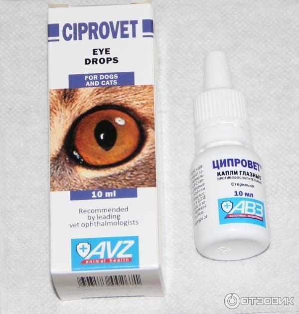 Лечение воспаления глаза у кошки: как и чем лечить, капли